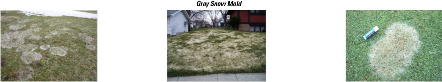 snowmold-visuals-gray