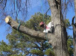 Tree Pruning St.Paul